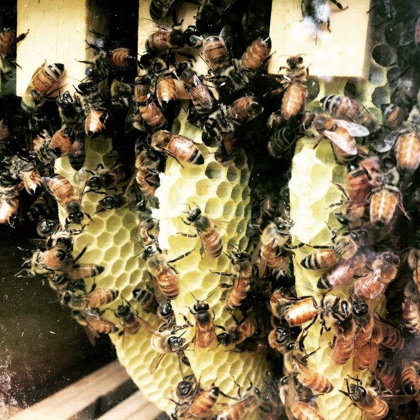 Back in Beesness!